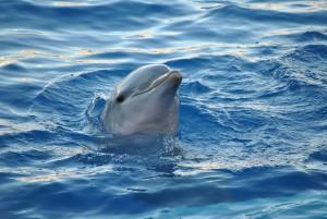 dolphin-893755_1280